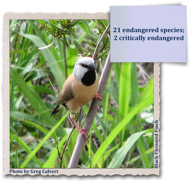 21 endangered species; 2 critically endangered
