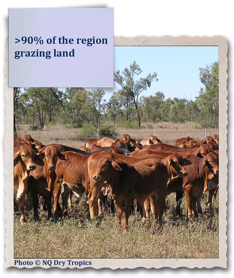 >90% of the region grazing land