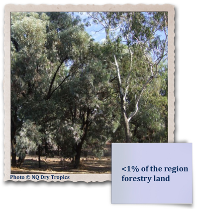 <1% of region forestry land