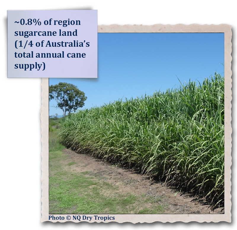 ~0.8% of region sugarcane land (1/4 of Australia's total annual cane supply)